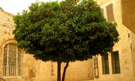 Des arbres artificiels pourraient g n rer de l nergie gr ce aux mouvements d - Generer de l electricite ...
