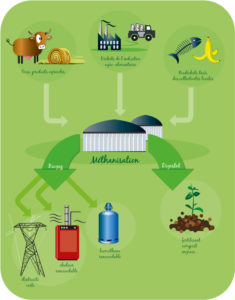 biomasse-difficile-equilibre-trouver