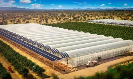 Une ferme australienne fait pousser ses cultures dans le d sert avec l 39 aide de l 39 nergie solaire - Faire pousser des endives dans l eau ...